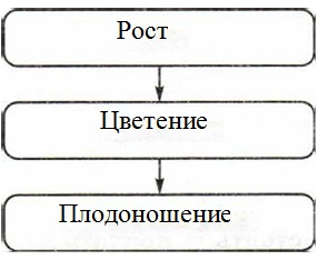 Какую связь отражает каждая схема 987